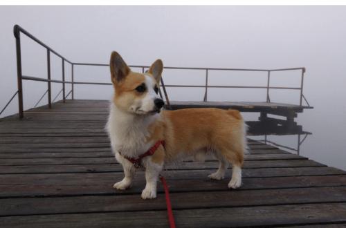 Sheldoncorgi.pl Blog o psach Welsh Corgi Pembroke - wakacje z psem