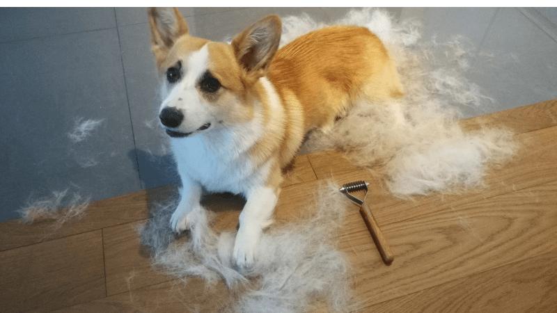 5 sposobów na psią sierść