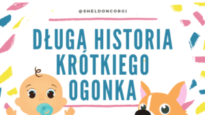 Sheldoncorgi.pl Blog o psach Welsh Corgi Pembroke - bajka o corgi, Długa historia krótkiego ogonka