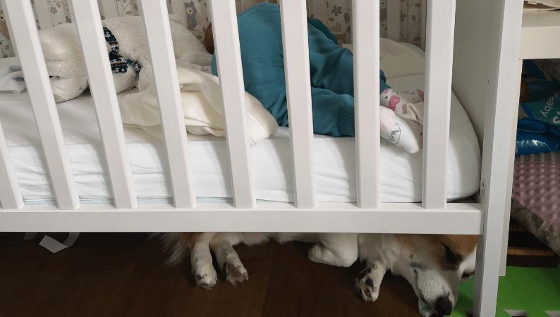 Niemowlak i pies - jak o działa?
