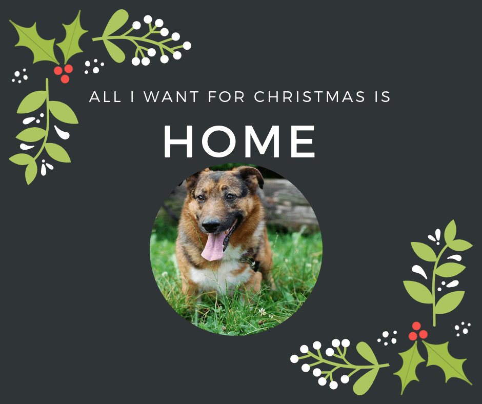 all_i_want_for_christmas_is_home