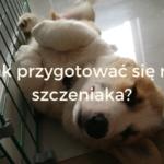 Welsh corgi pembroke Szczeniak, corgi, pies, jak przygotować się na szczeniaka sheldoncorgi.plJak przygotować się na szczeniaka? - sheldoncorgi.pl