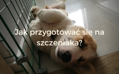 Szczeniak w domu, czyli jak przygotować się na psa