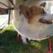 Bez jaj o kastracji - pies w kołnierzu