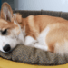 Sheldoncorgi.pl Blog o psach Welsh Corgi Pembroke - legowisko dla psa