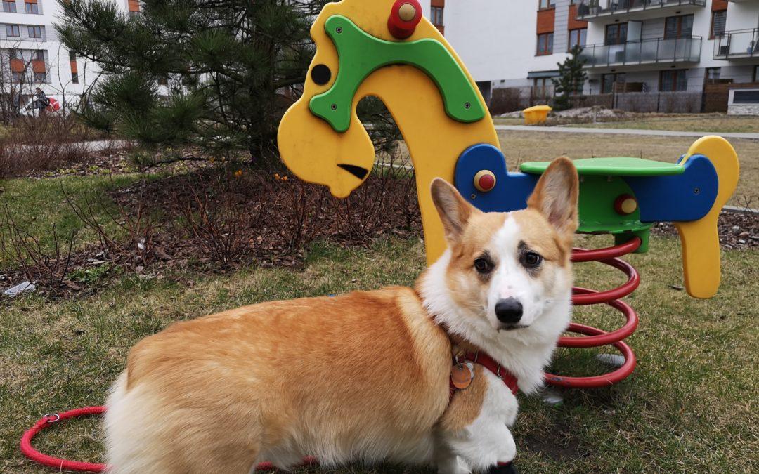 Ile kosztuje weterynarz dla psa?