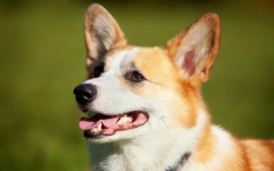 Psia sesja – czyli fotografia rodzinna inaczej!