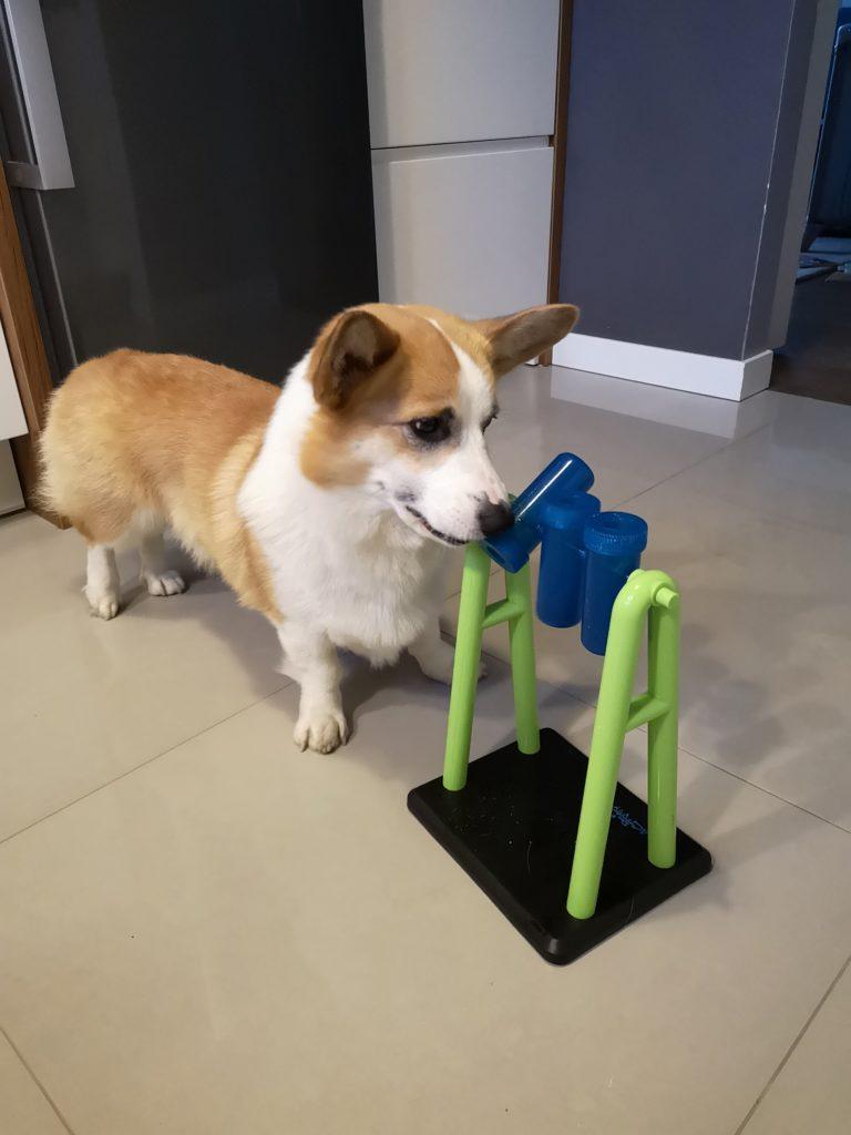 Zabawy z psem, zabawki edukacyjne