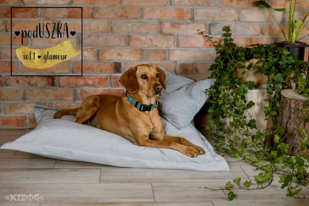 PodUszka, poduszka dla psa, legowisko