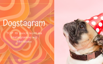 TOP 10 Psich kont na Instagramie według Sheldona