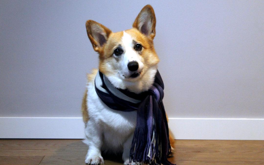 Pies w zimę – jak dbać o psa zimą?