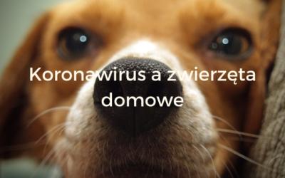 Koronawirus a zwierzęta domowe